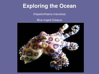 Exploring the Ocean (Hapalochlaena maculosa) Blue-ringed Octopus