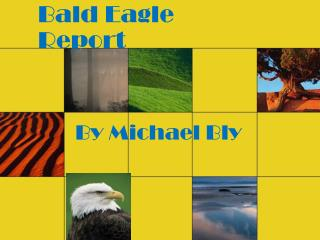 Bald Eagle Report