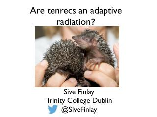 Are tenrecs an adaptive radiation ?