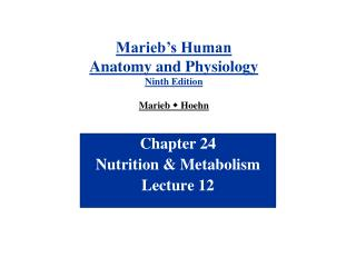 Chapter 24 Nutrition & Metabolism Lecture 12