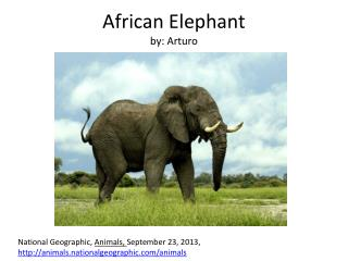 African Elephant by:  Arturo