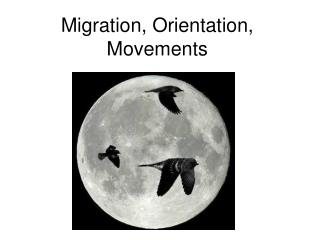 Migration, Orientation, Movements