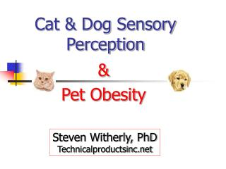 Cat & Dog Sensory Perception