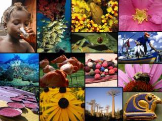 Internationales Jahr der Biodiversität