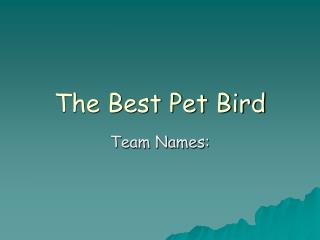 The Best Pet Bird