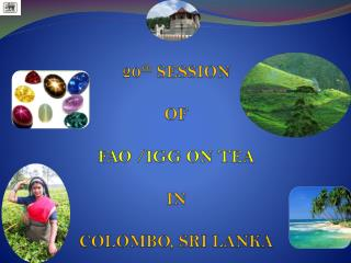 20 th  SESSION  OF  FAO /IGG ON TEA  IN  COLOMBO, SRI LANKA