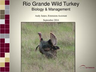 Rio Grande Wild Turkey Biology  & Management Andy James, Extension Assistant September 2014