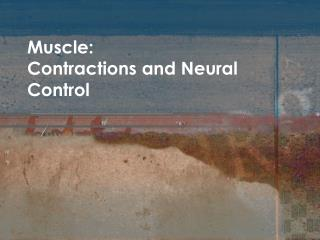 Muscle: Contractions and Neural Control