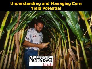 Understanding and Managing Corn Yield Potential