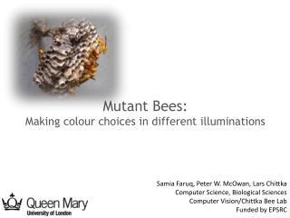 Mutant Bees: Making colour choices in different illuminations