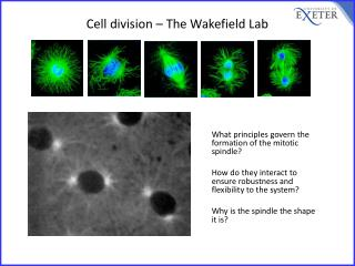 Cell division – The Wakefield Lab