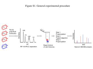 Figure S1. General experimental procedure