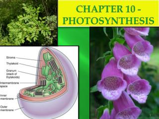 CHAPTER 10 - Photosynthesis