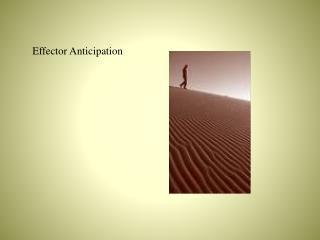 Effector Anticipation