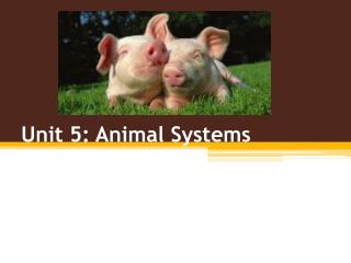Unit 5: Animal Systems