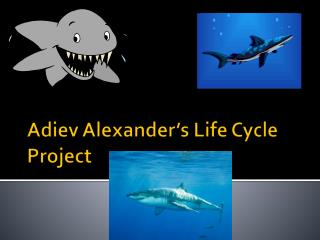 Adiev  Alexander's Life Cycle Project