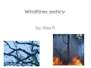 Wildfires policy