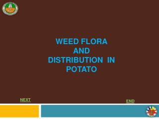 WEED FLORA AND DISTRIBUTION  IN POTATO