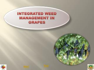 INTEGRATED WEED MANAGEMENT IN GRAPES