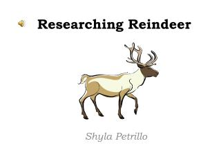 Researching Reindeer