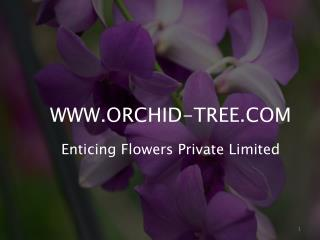 Special Offer on Orchid Plants Online Sale