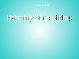 Hatching Brine Shrimp