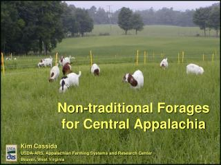 Non-traditional Forages  for Central Appalachia