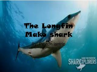The Longfin Mako shark