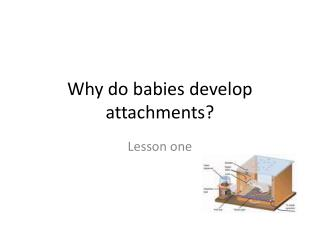 Why do babies develop attachments?
