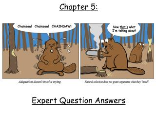 Chapter 5: Expert Question Answers