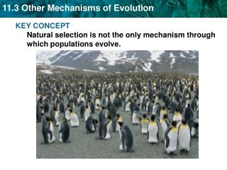 KEY CONCEPT  Natural selection is not the only mechanism through which populations evolve.