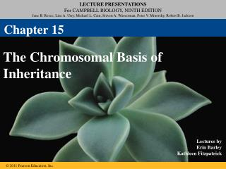 The Chromosomal Basis of Inheritance