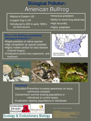 Why is the Bullfrog considered 'Biological Pollution'? Rapid predation of native species