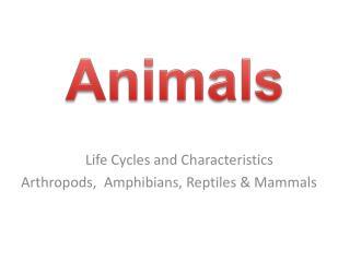 Life Cycles and Characteristics      Arthropods,  Amphibians, Reptiles & Mammals