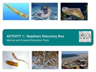 ACTIVITY 1:  Seashore Discovery Box Marine and Coastal Education Pack