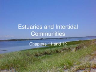 Estuaries and Intertidal Communities