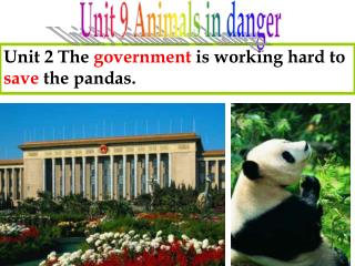 Unit 2 The  government  is working hard to  save  the pandas.