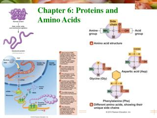 Chapter 6: Proteins and Amino Acids