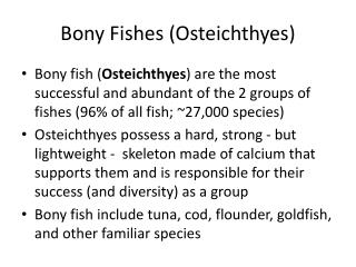 Bony Fishes (Osteichthyes)