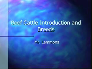 Beef Cattle Introduction and Breeds