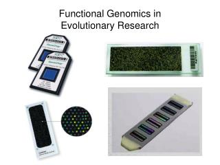 Functional Genomics in  Evolutionary Research