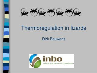 Thermoregulation in lizards