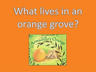 What lives in an orange grove?