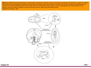 Figure 2.4 Body forms of some amphibian larvae arranged by habitat type.