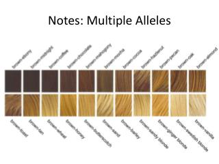 Notes: Multiple  Alleles