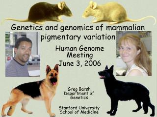 Genetics and genomics of mammalian pigmentary variation