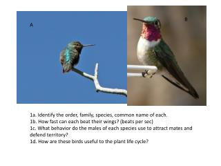 1a. Identify the order, family, species, common name of each.