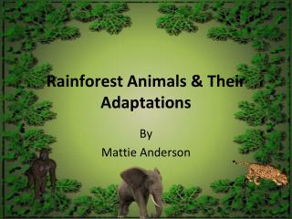 Rainforest Animals & Their Adaptations