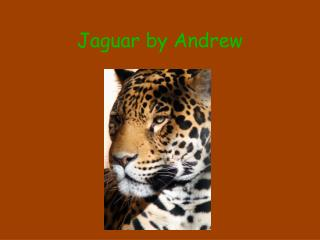 Jaguar by Andrew