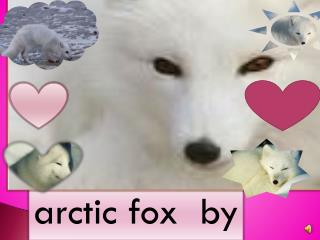 arctic fox  by Ethan and Sydney